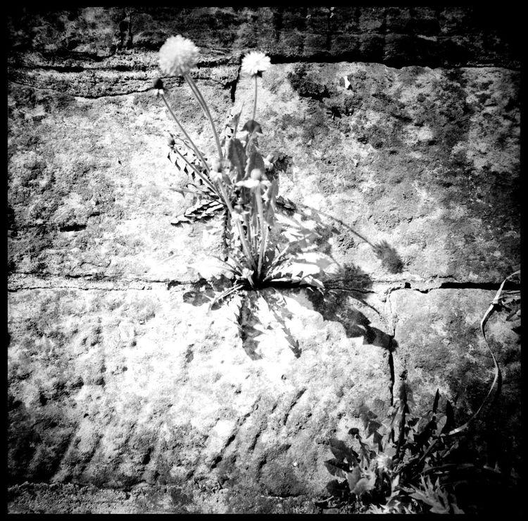 Bulbs and Psalms Abandonded Alps Architecture Arth Goldau Black And White Bulb Bulb Factory Catholic Church Gothic Light Lomography Medium Format Mount Rigi Psalm Psalm No.5 Pusteblume Rigi Rigi Bahn Snow And Ice  Stairway Swiss Alps Switzerland Urban