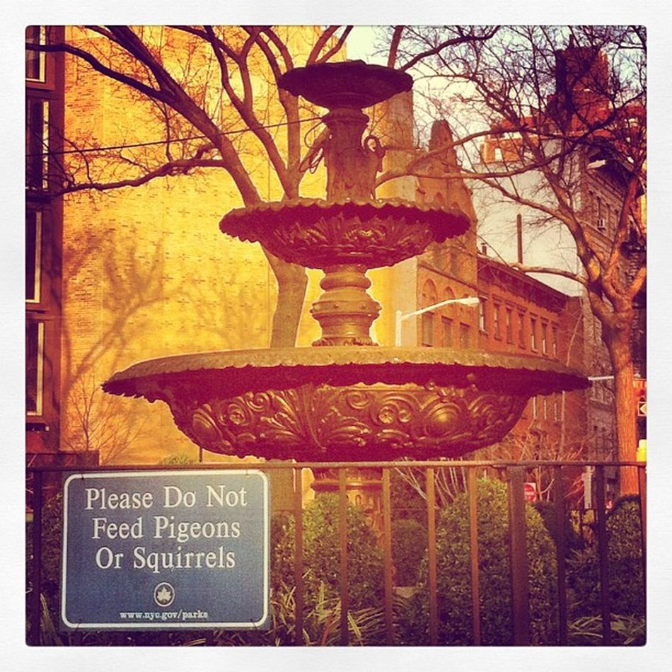 #please #pigeons #squirrels #park #ny #nyc #newyork #newyorkcity #fountain #gov #outside #urban #nature #urbannature #fountain #shrubs NY Park Newyork Shrubs Newyorkcity Squirrels Please NYC Urbannature Nature Gov Urban Outside Fountain Pigeons