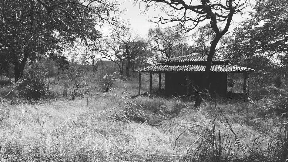 House Campo 5 Seconds Of Summer Abandono Assustador Lugares Por Onde Passei!! Onde Filmedeterro Blackandwhite Black & White