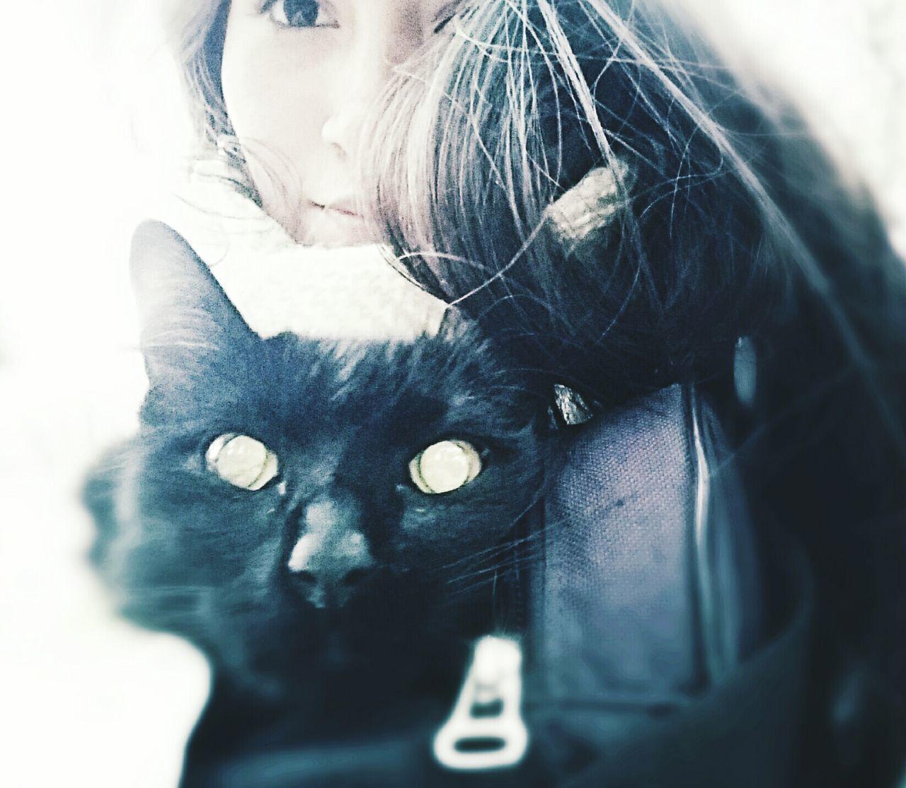 Cat Cat Black Cat Cat Eyes Love ♥ Miradas Hermosas Animal Love Negrita
