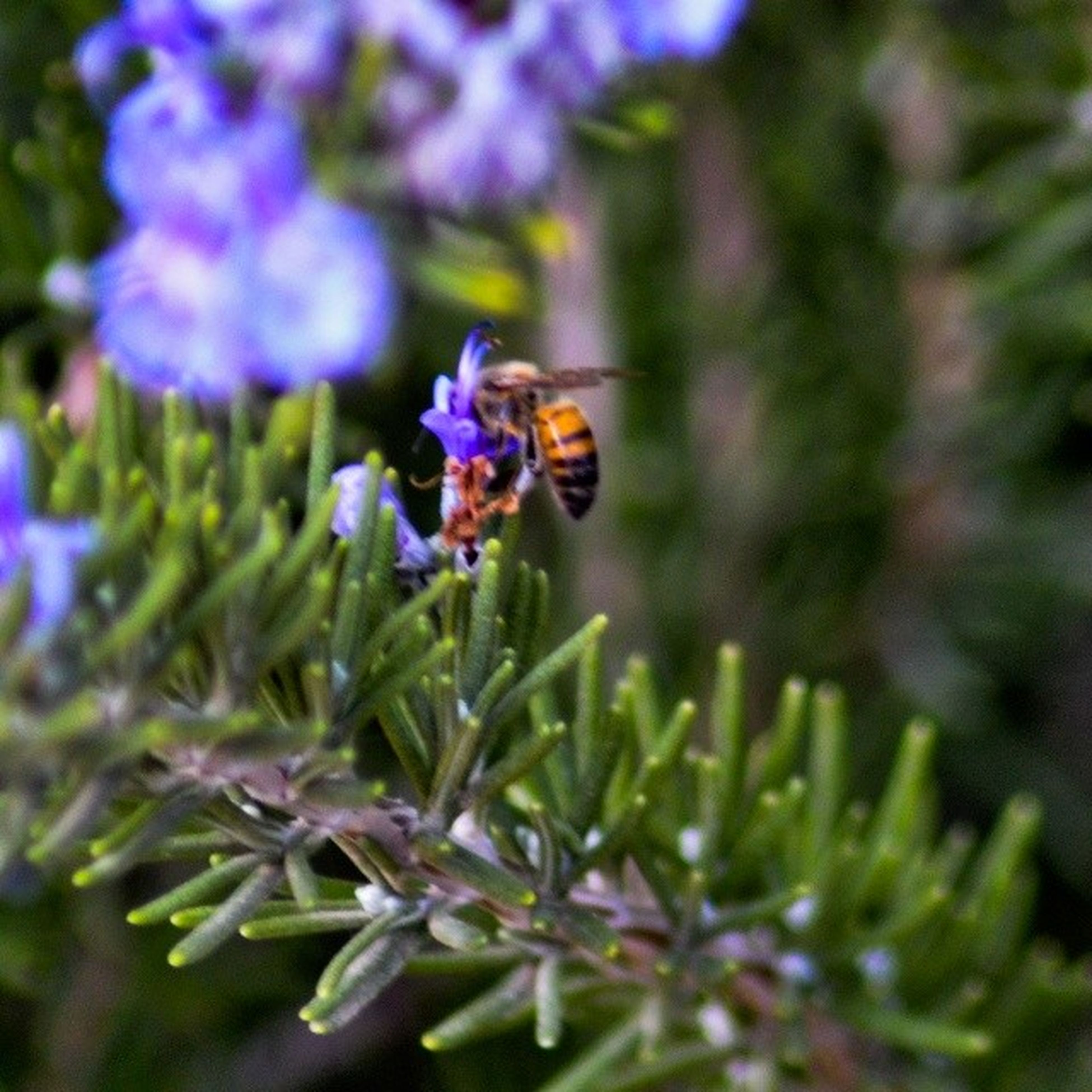 flower, insect, one animal, animal themes, animals in the wild, wildlife, purple, fragility, freshness, pollination, growth, bee, beauty in nature, close-up, plant, focus on foreground, selective focus, nature, petal, symbiotic relationship