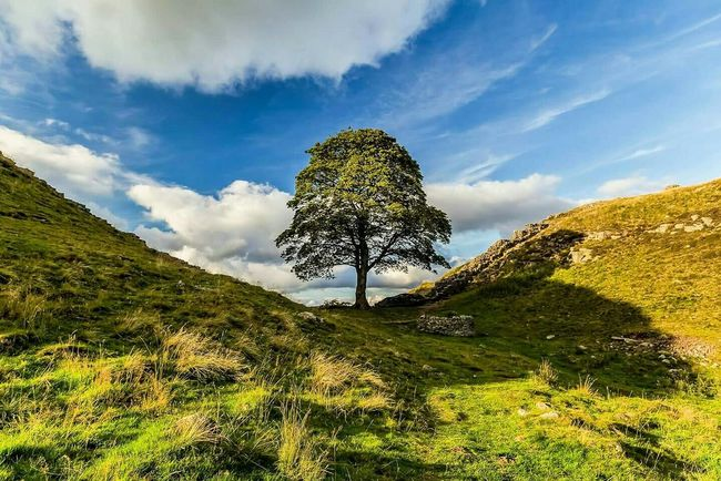 Sycamore Gap, Hadrian's Wall Summer Eyem Gallery Eye4enchanting Eye4photography  Landscape_Collection TreePorn Sky_collection EyeEm Nature Lover Nature_ Collection