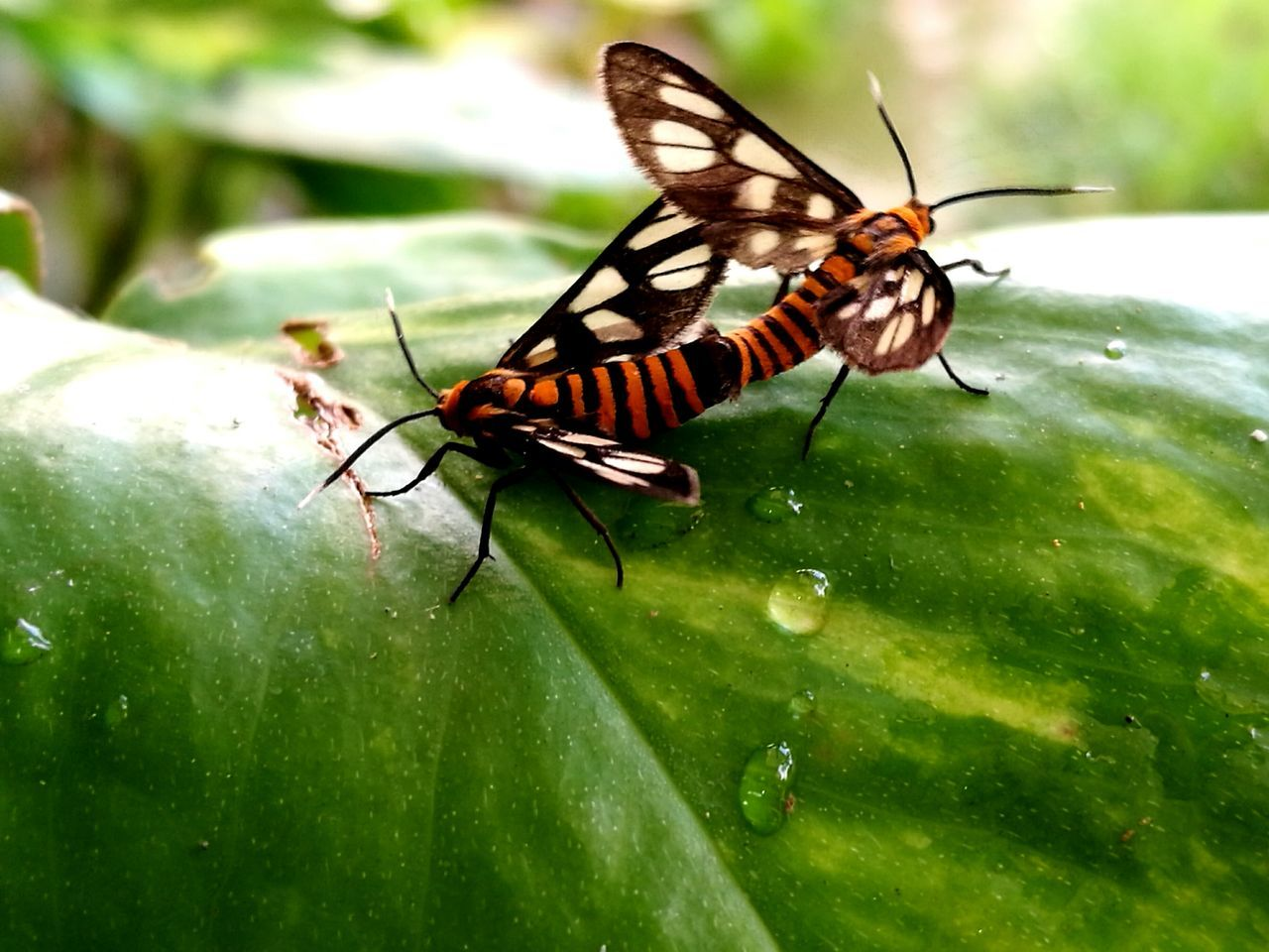 Insect Animals In The Wild Beauty In Nature