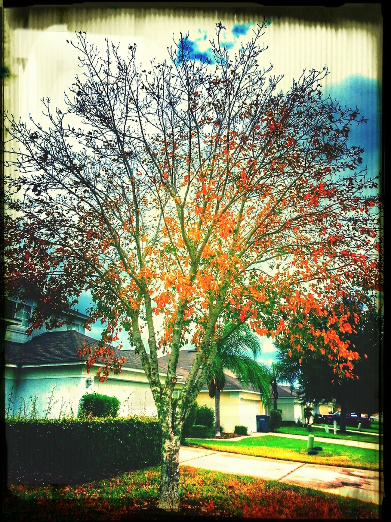 Fall Seasons Walking Around View