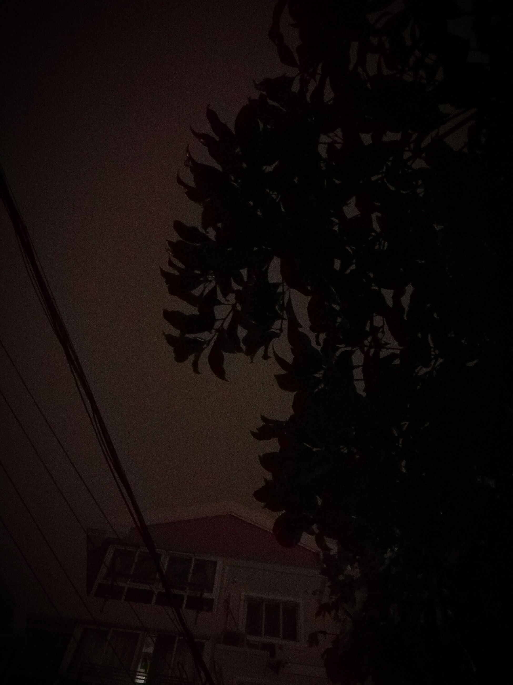 night, low angle view, growth, dark, plant, illuminated, copy space, silhouette, indoors, no people, built structure, nature, leaf, wall - building feature, architecture, light - natural phenomenon, tree, lighting equipment, shadow