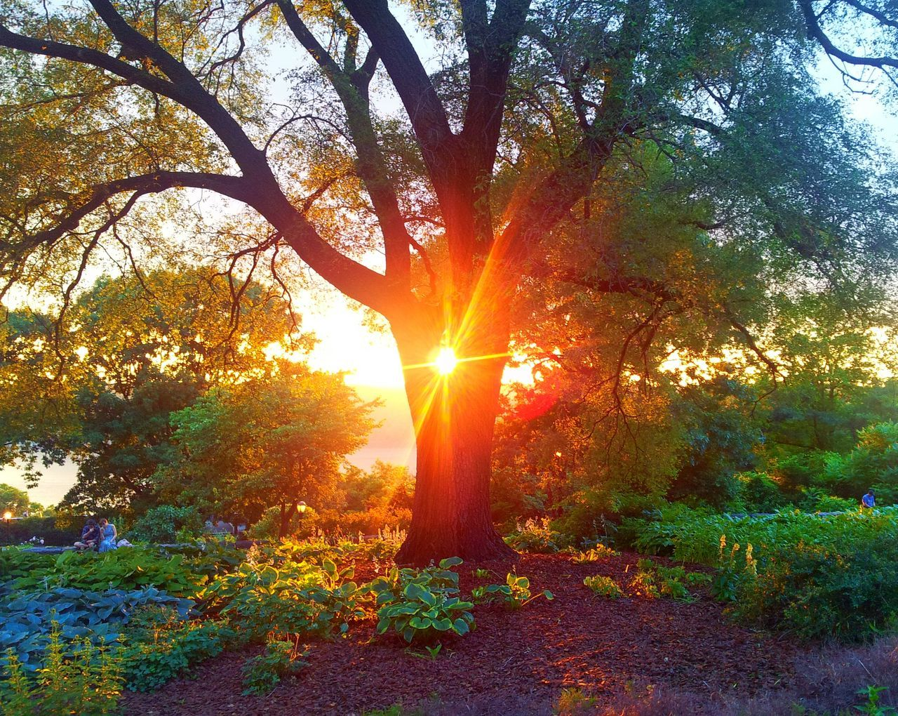 tree, sunbeam, sun, nature, beauty in nature, tranquil scene, sunlight, lens flare, tranquility, orange color, scenics, sunset, growth, no people, outdoors, autumn, branch, day, sky