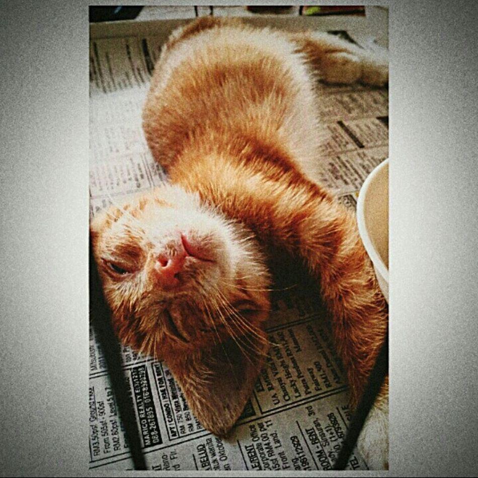 Found a stray kitten🐱 at my school🏫 on 28 October 2015