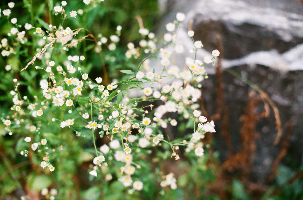 다사읍 세천리 First Eyeem Photo Flowers Green Minolta Alpha9000
