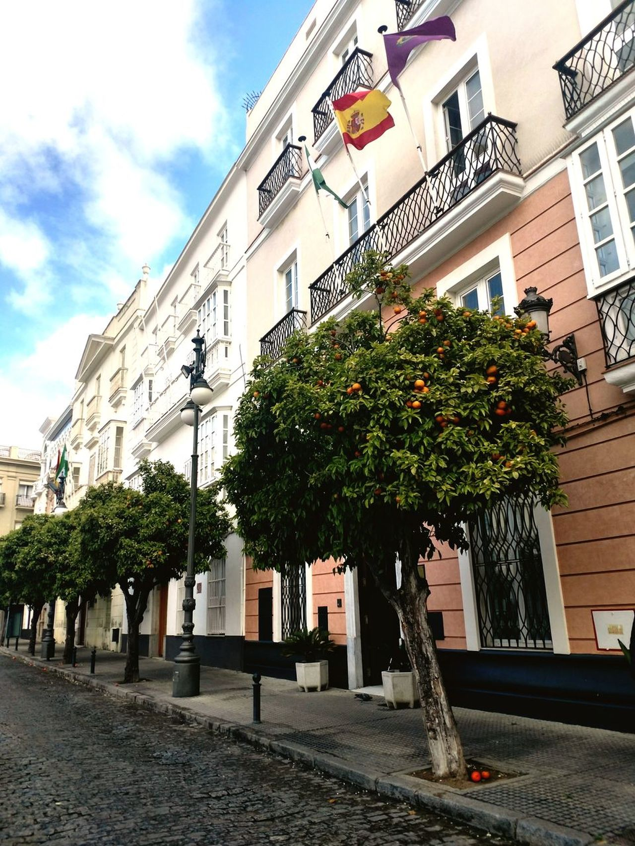 Spring in Spain ... No People Tree Architecture Outdoors Building Exterior Walking Around Lifestyle SPAIN History Architecturephotography City Life Streetphotography Turistic Places Freshness Blossom Flower Fruit Orange Sunlight Flag Plant Springtime Nature City Detail