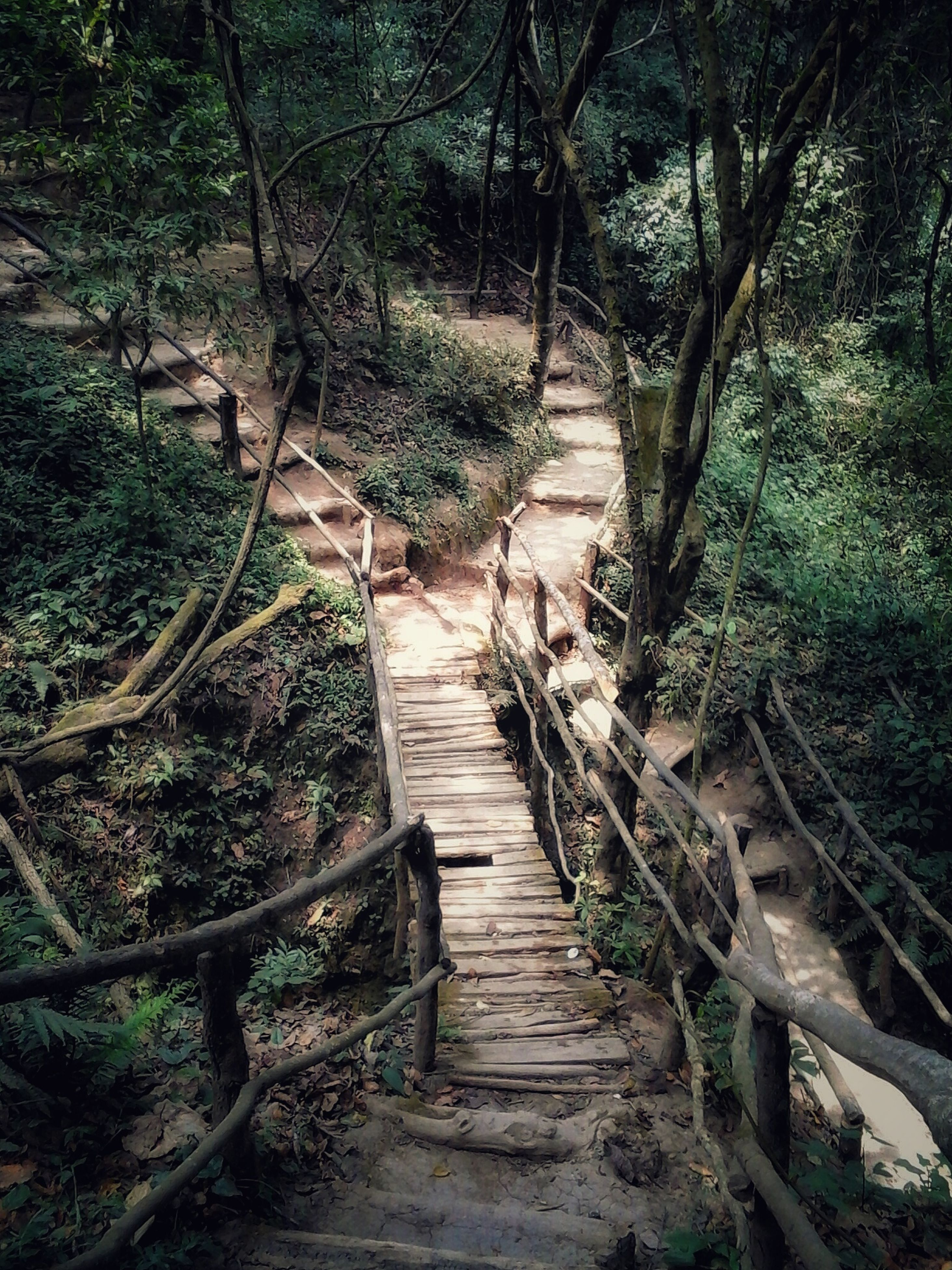 the way forward, steps, tree, wood - material, forest, tranquility, staircase, steps and staircases, plant, narrow, nature, railing, growth, boardwalk, tranquil scene, wood, walkway, day, outdoors, no people