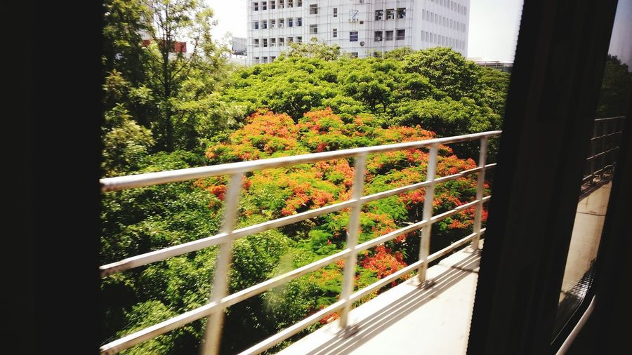 Trees Colorful Trees Flowers view from a Metro Life Is Waiting Enjoying Life I LOVE PHOTOGRAPHY Travelling Photography Colorful colourful Cheers To The Nature Feel The Moment Finding Peace Cheers To The Freakin Weekend Cheers To Summer Hanging Out Pixelmastercamera Asuszenfonemaxphotography Beautiful Check This Out Roaming Moving World Urbanization Development Nature Within The City at Namma Metro😊, Bangalore, India.