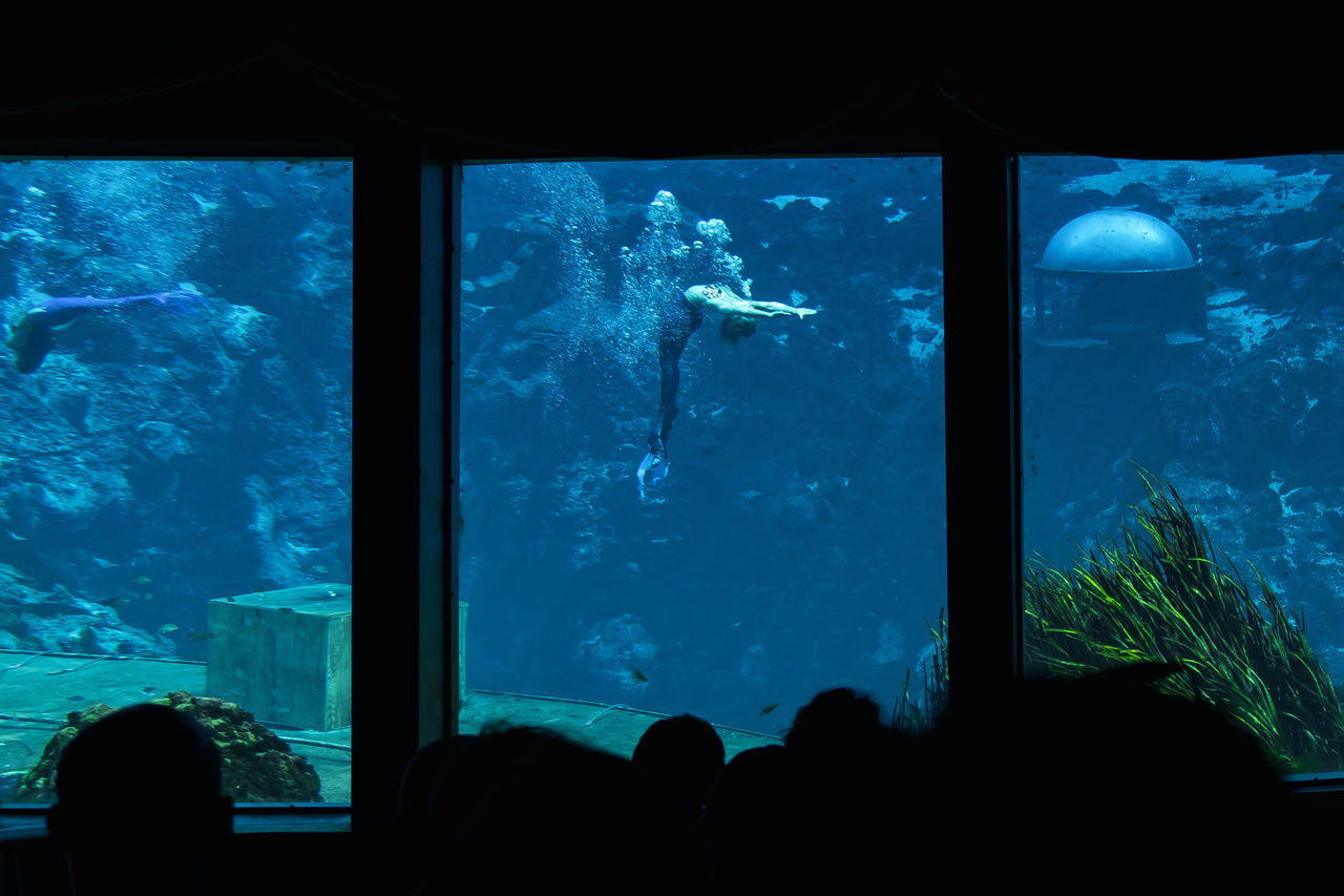 Animal Animal Themes Animal Wildlife Animals In Captivity Animals In The Wild Aquarium Beauty Spa Blue Day Fish Indoors  Large Group Of Animals Learning Nature People Scuba Diving Sea Sea Life Swimming UnderSea Underwater Watching Water 3XSPUnity
