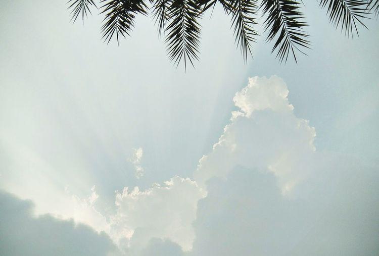 Skyline Skyography Bangkok Pines