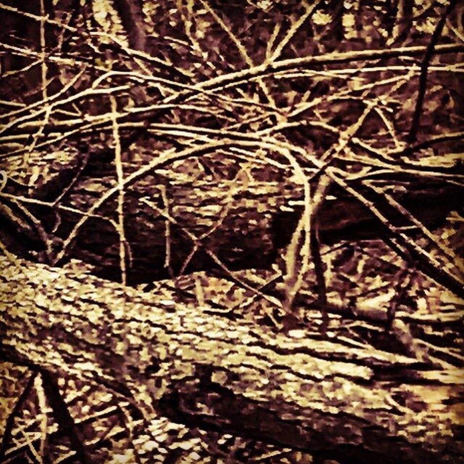 The remnants of a broken tree Woodswalk Branch Tree Nature No People Close-up Outdoors Camerafilters IPhone7Plus Sticks