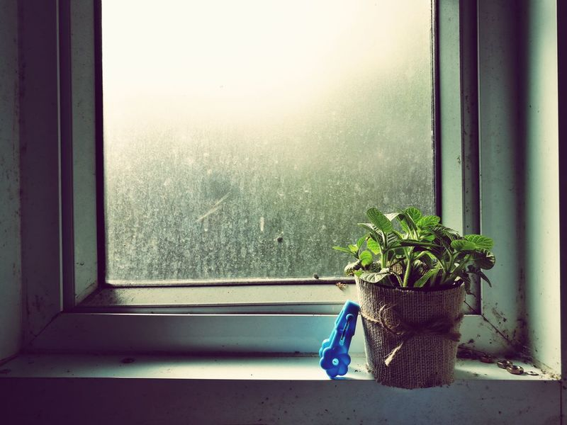Window Indoors  Day No People Plant Nature Growth Clothespin Clothespins Clothes Peg Clothes Pegs EyeEmNewHere Silhouette Texture Glass Stain