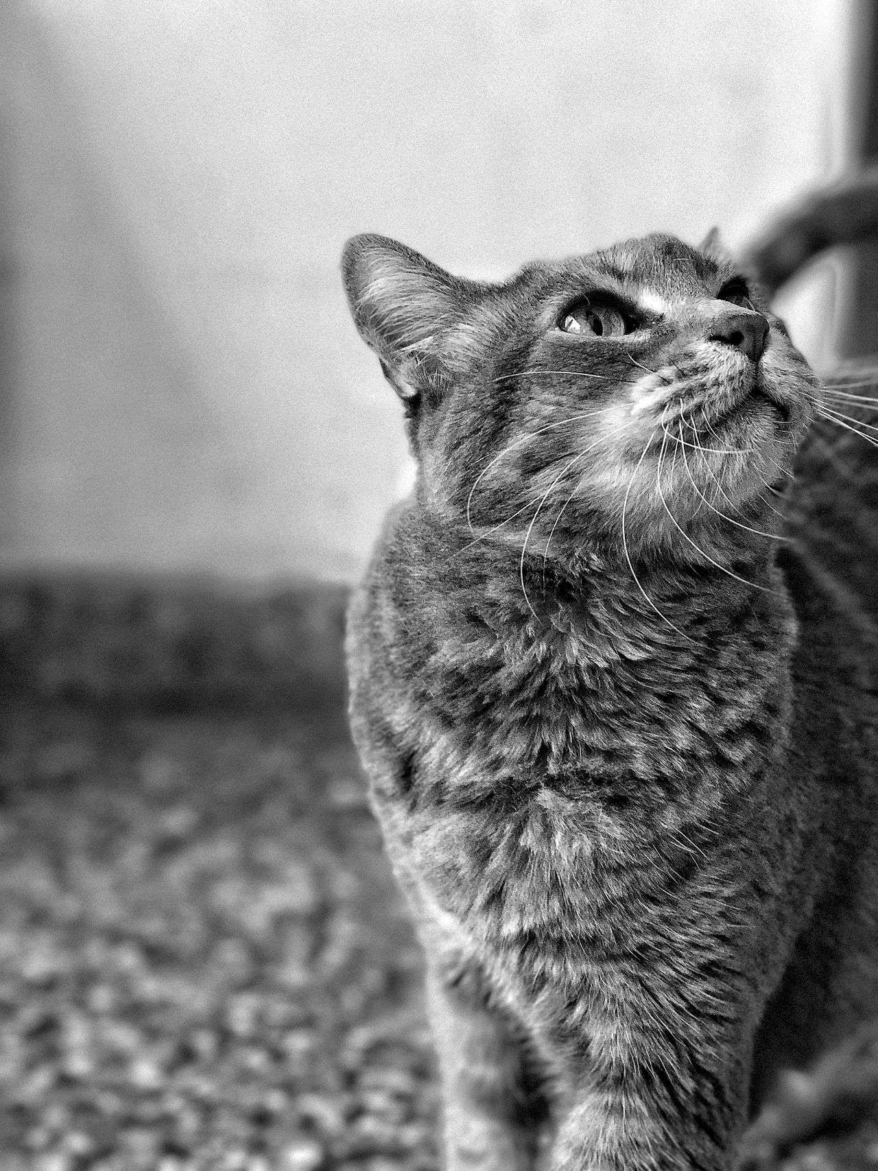 One Animal Domestic Animals Animal Themes Pets Mammal Domestic Cat Close-up Feline No People Outdoors Day Nature Black And White Blackandwhite Black & White Blsckandwhite Black And White Photography