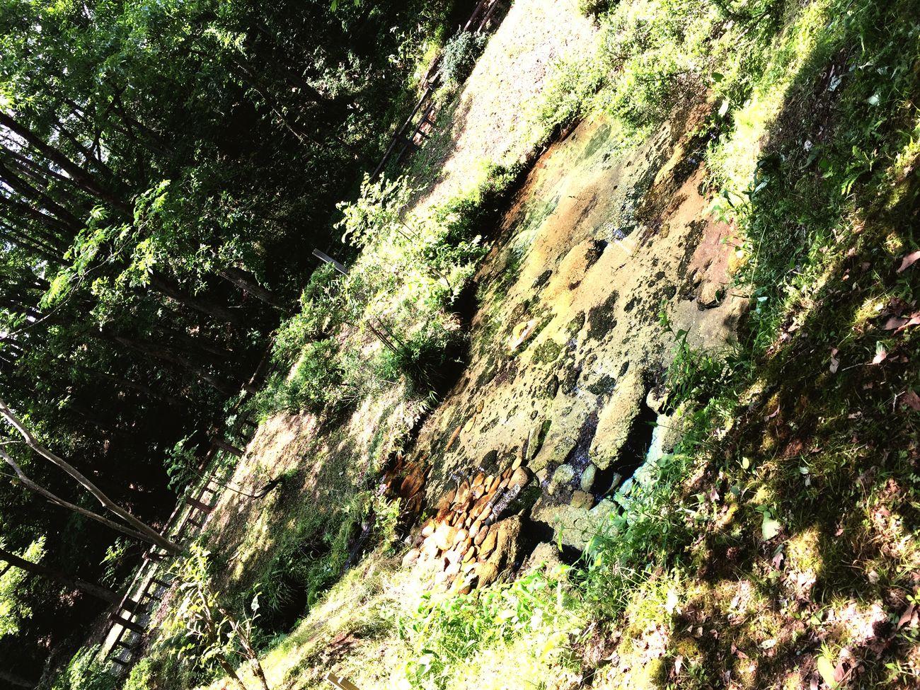 岡山 真庭 蒜山 塩釜の冷泉