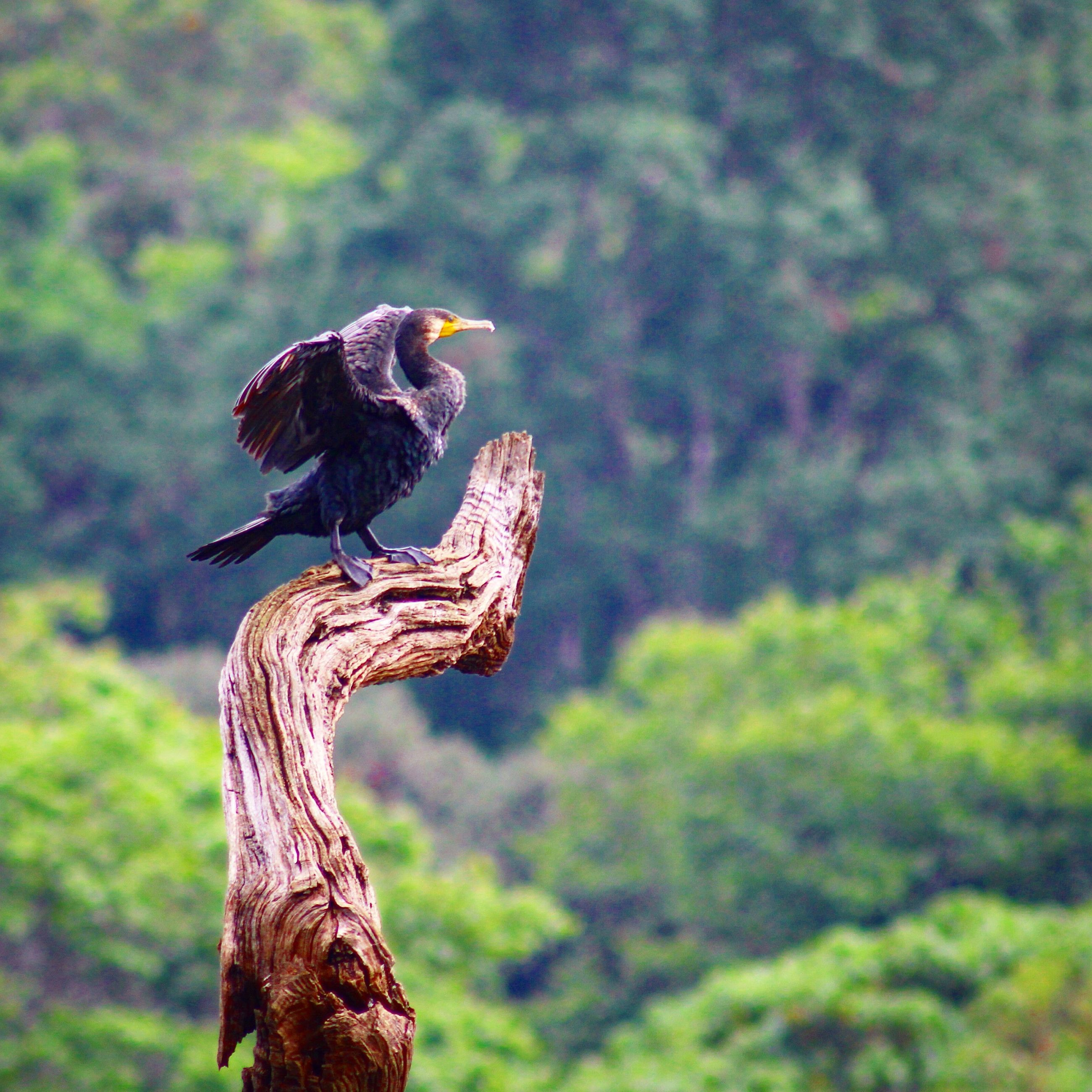 animal themes, animals in the wild, wildlife, one animal, focus on foreground, bird, perching, side view, nature, full length, close-up, day, outdoors, tree, lizard, branch, no people, reptile, two animals, wood - material