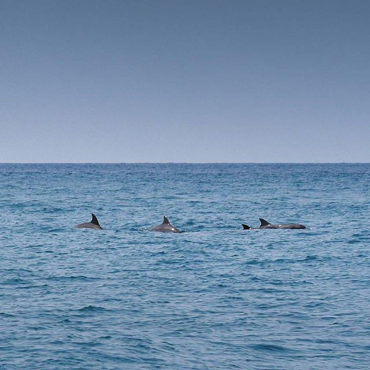 ฝูงโลมามาโชว์ตัว Lumixgx8 4kphoto Loveandaman Islandlife Thailandallshots Thailand Sea Sand Sunbath Phuket Reviewthailand Reviewphuket Beachlife Dolphins Dolphinlove
