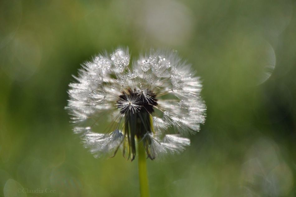 Beautiful stock photos of weed, Blossom, Environment, Flower, Fragility