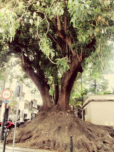 Big Three Green Green Green!  Street Photography Portugal_lovers