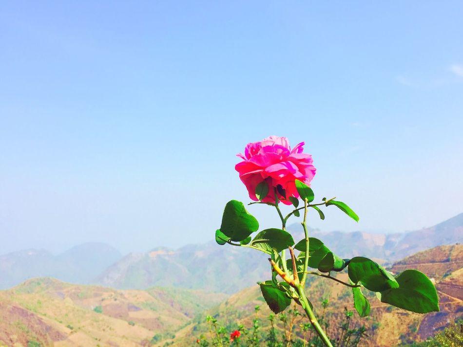 Kalaw Myanmar Moutains Flower Beautiful Fresh Air Nice Weather