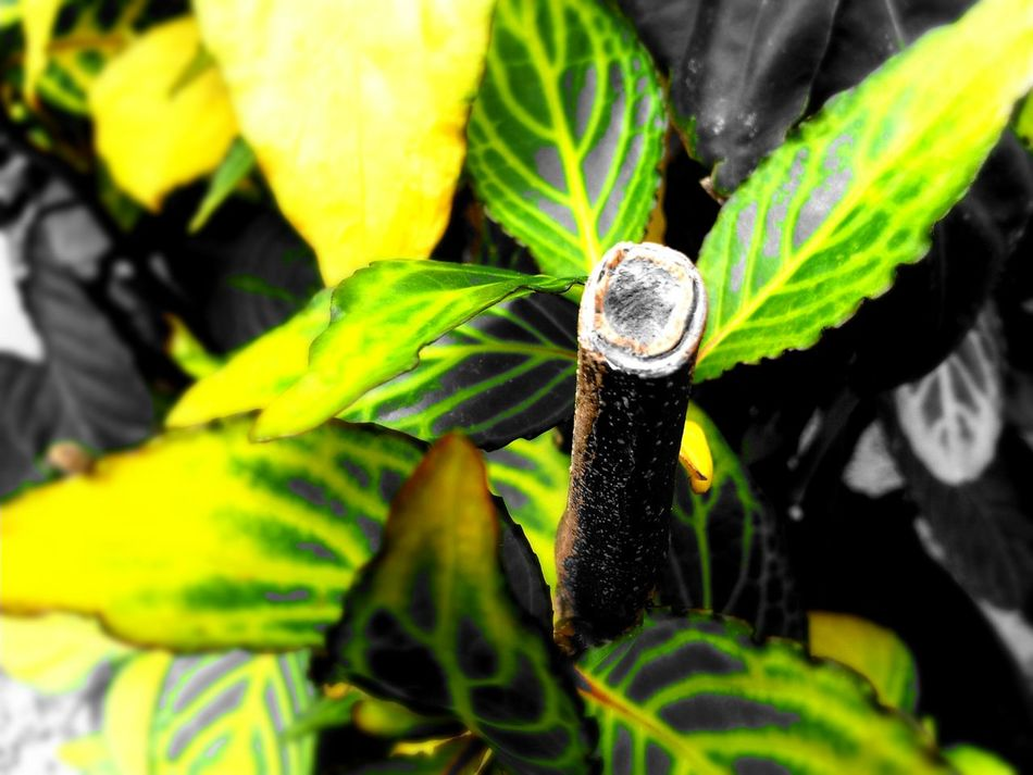 Nature Photography Plants Checkthisout