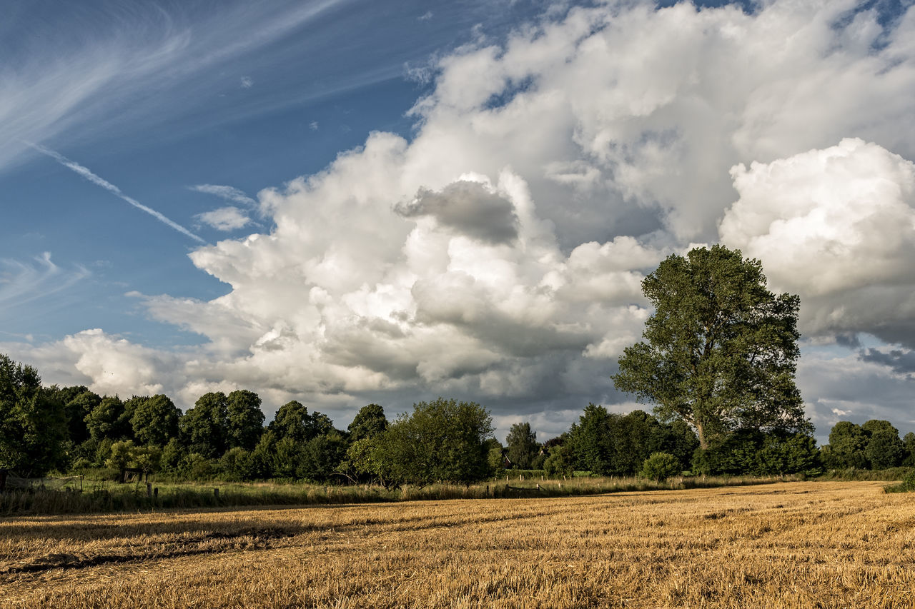 farmland Dramatic Sky Schleswig-Holstein Agriculture Beauty In Nature Cloud - Sky Cornfield Day Farmlandscape Field Growth Landscape Nature No People Outdoors Rural Scene Scenics Sky Tranquil Scene Tranquility Tree