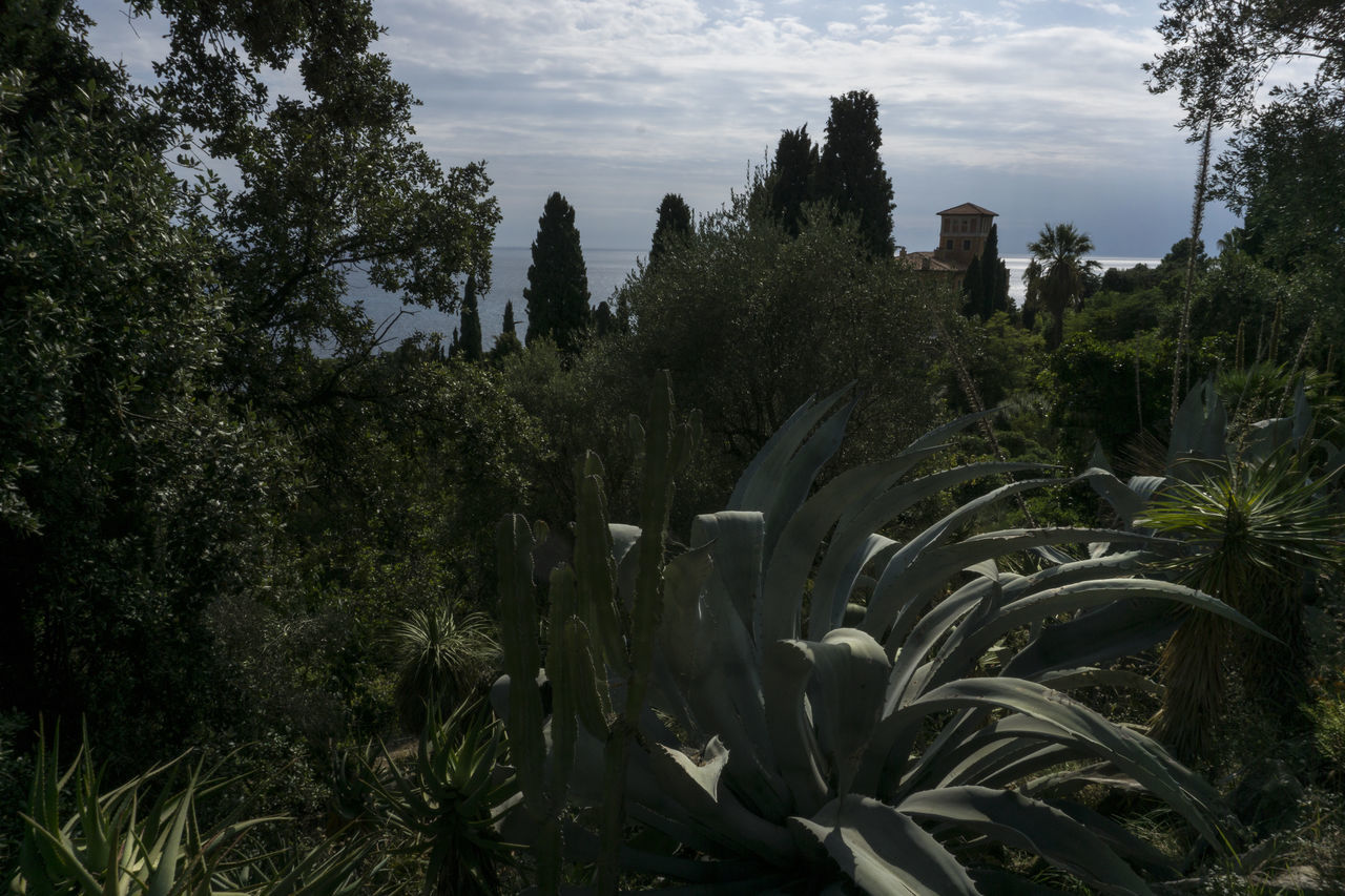 italia Agave Botanical Gardens Botanischer Garten Costa Azzurra Côte D'Azur Day Giardini Hanbury Giardino Botanico Growth Italia Italie Italien Italy Italy❤️ Italy🇮🇹 Mare Mountain Nature No People Outdoors Riviera Sea Sky Tree Ventimiglia
