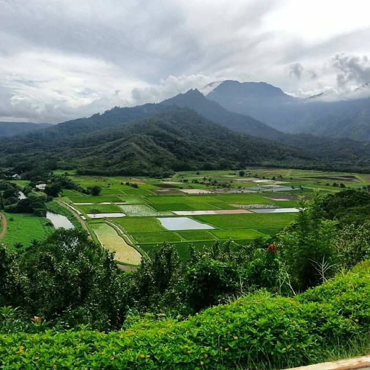 Landscape Mountain Range Green Color Cloud - Sky Field Rural Scene Mountain Social Issues No People Nature Outdoors Terraced Field Day Lush Greenery Kauai Hawaii Beauty In Nature Green Color Tranquility Postcard