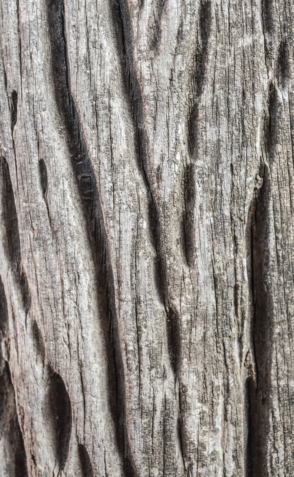 Backgrounds Bark Close-up Cracked Day Full Frame Hardwood Knotted Wood Nature No People Outdoors Pattern Rough Textured  Timber Tree Tree Trunk Weathered Wood - Material Wood Grain