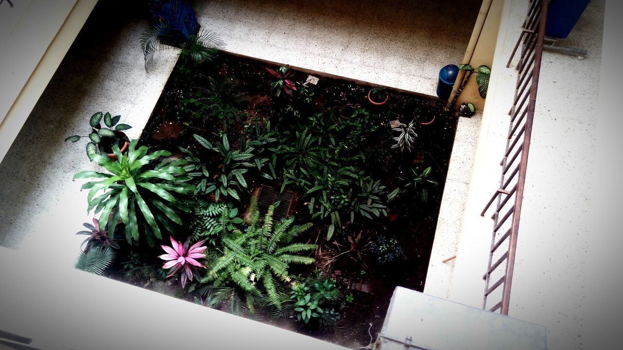 Plant Growth High Angle View Potted Plant Day Architecture Built Structure Outdoors No People Building Exterior Nature Indoors  Architecture