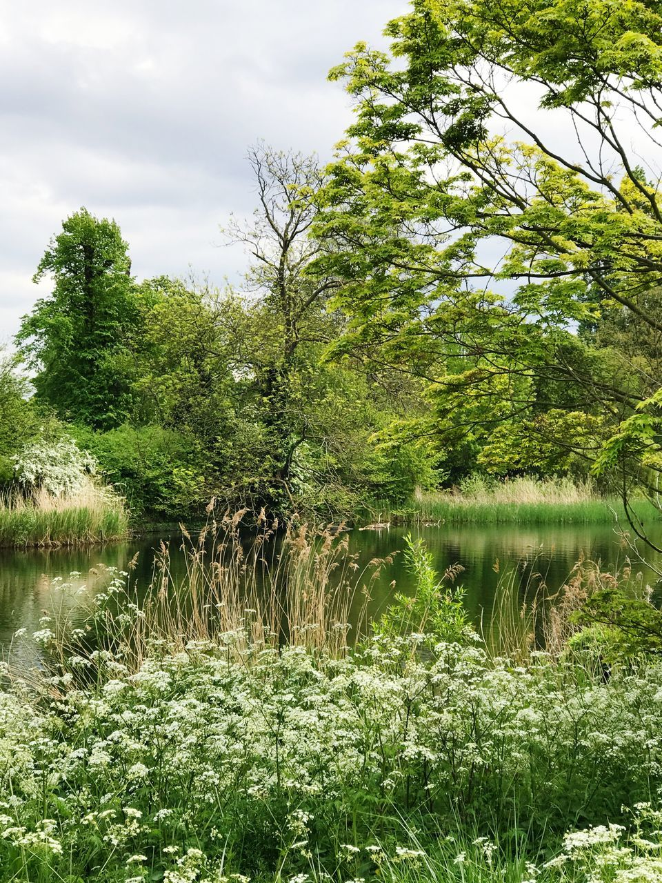 tree, water, lake, growth, nature, tranquil scene, tranquility, green color, no people, outdoors, grass, day, scenics, beauty in nature, landscape, sky, plant, forest