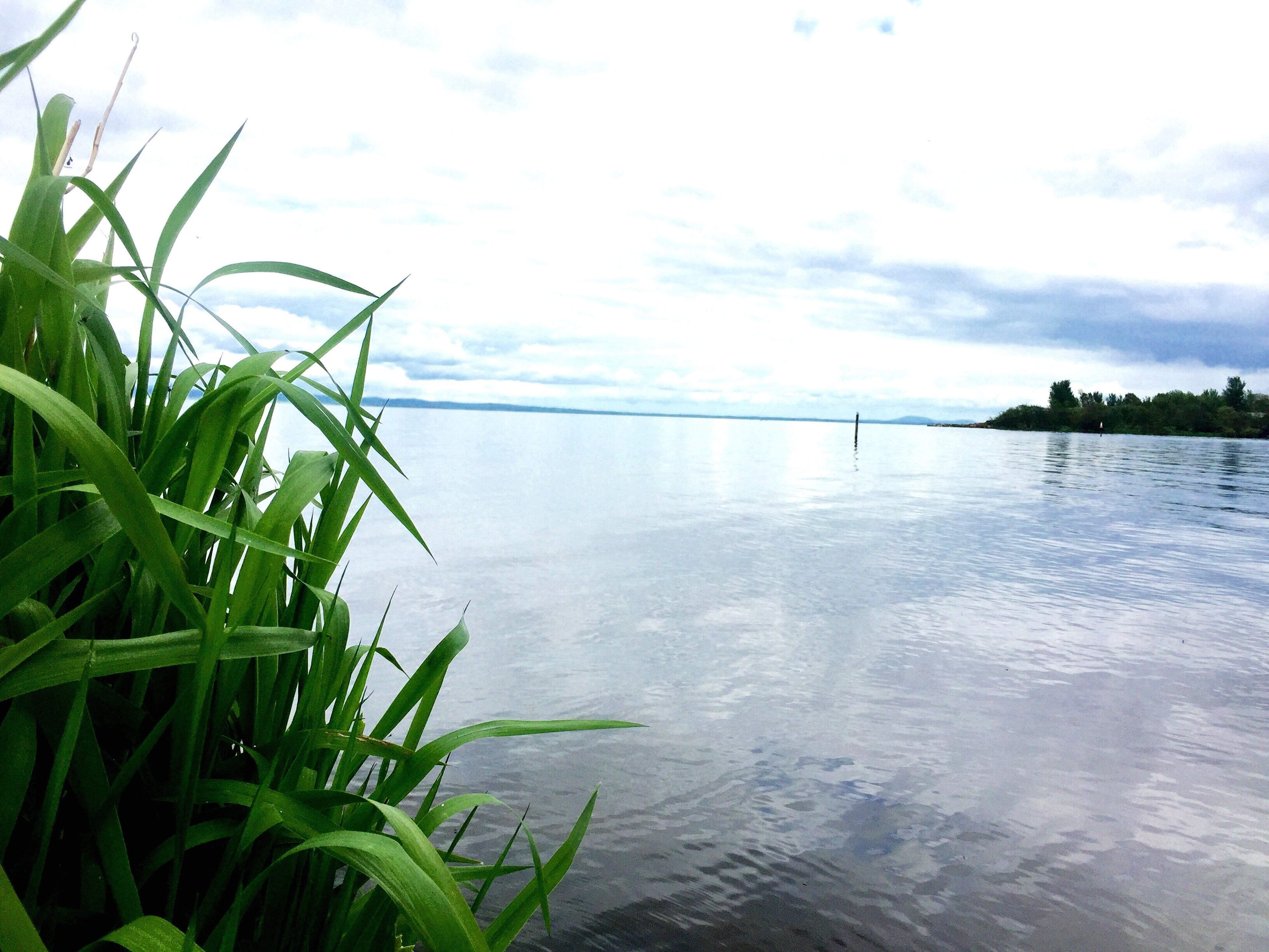 water, tranquility, sky, sea, tranquil scene, beauty in nature, nature, scenics, plant, growth, palm tree, horizon over water, leaf, beach, idyllic, lake, green color, cloud - sky, reflection, outdoors