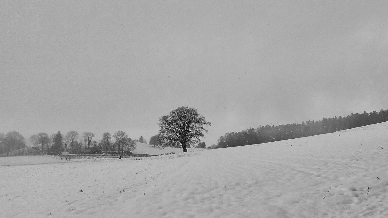 Blackandwhite Winter Landscape Snow Tree