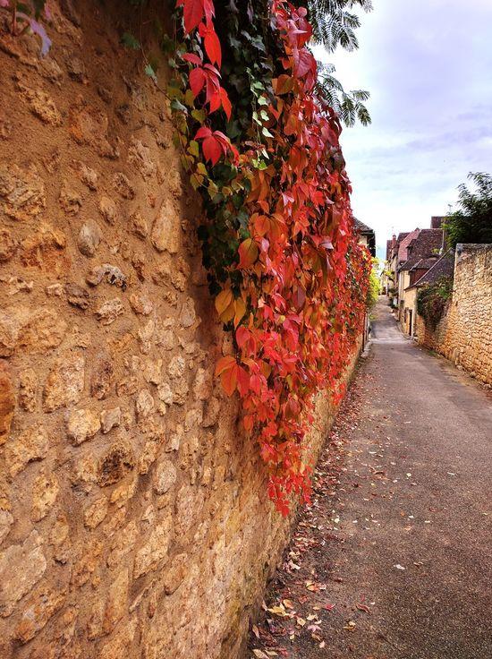 Outdoors Day No People France Photos France 🇫🇷 France Dordogne Domme Plants Leaves🌿 Autumn Colors Autumn🍁🍁🍁