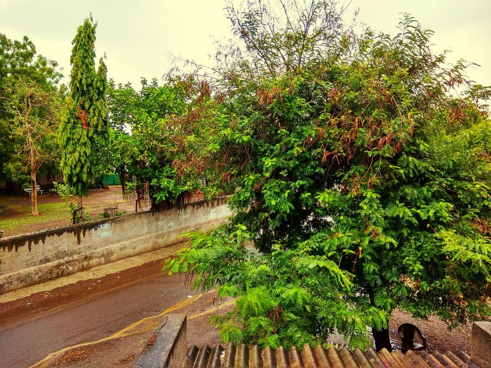 Rainy Days Tree Growth Water No People Outdoors Day Nature Plant Sky Beauty In