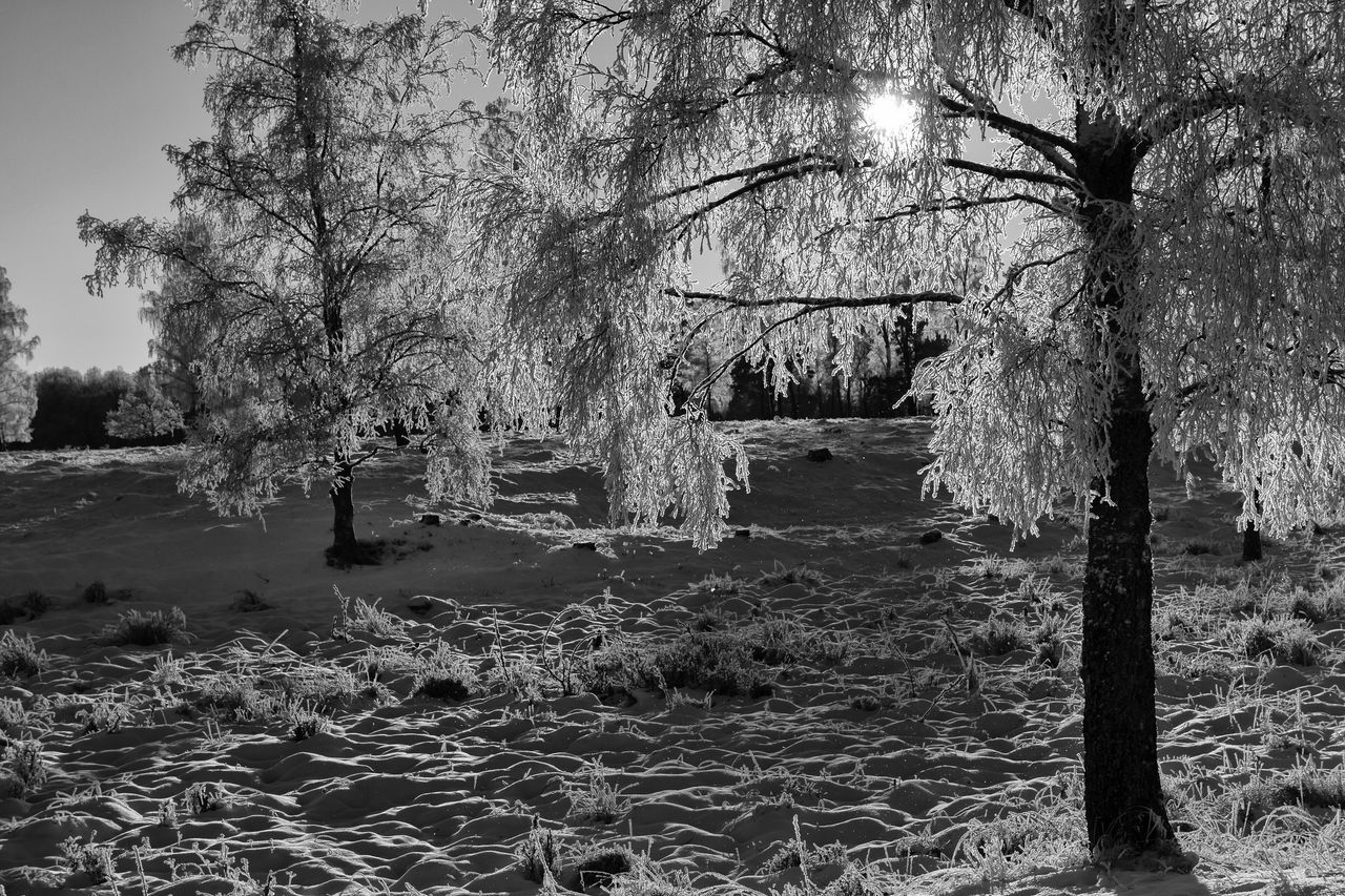 Winter landscape (bnw version) - Tree Nature Branch Tranquil Scene Tranquility Beauty In Nature Scenics Landscape Black & White Black And White Blackandwhite Cold Temperature EyeEm Masterclass The Week Of Eyeem EyeEm Best Shots - Black + White Exceptional Photographs First Eyeem Photo Sunlight Monochrome Monochrome Photography Hello World Winter Enlight Idyllic Eye4photography