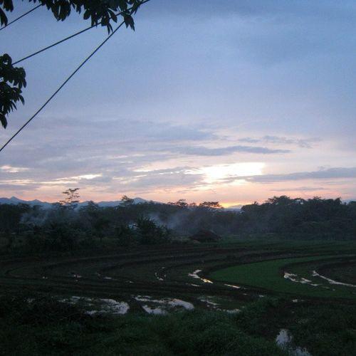 [ wonotunggal, februari 2013 ] Wonotunggal Centraljava Java INDONESIA asia ricefield sunset picoftheday photooftheday nature instanusantara instanusantaranature