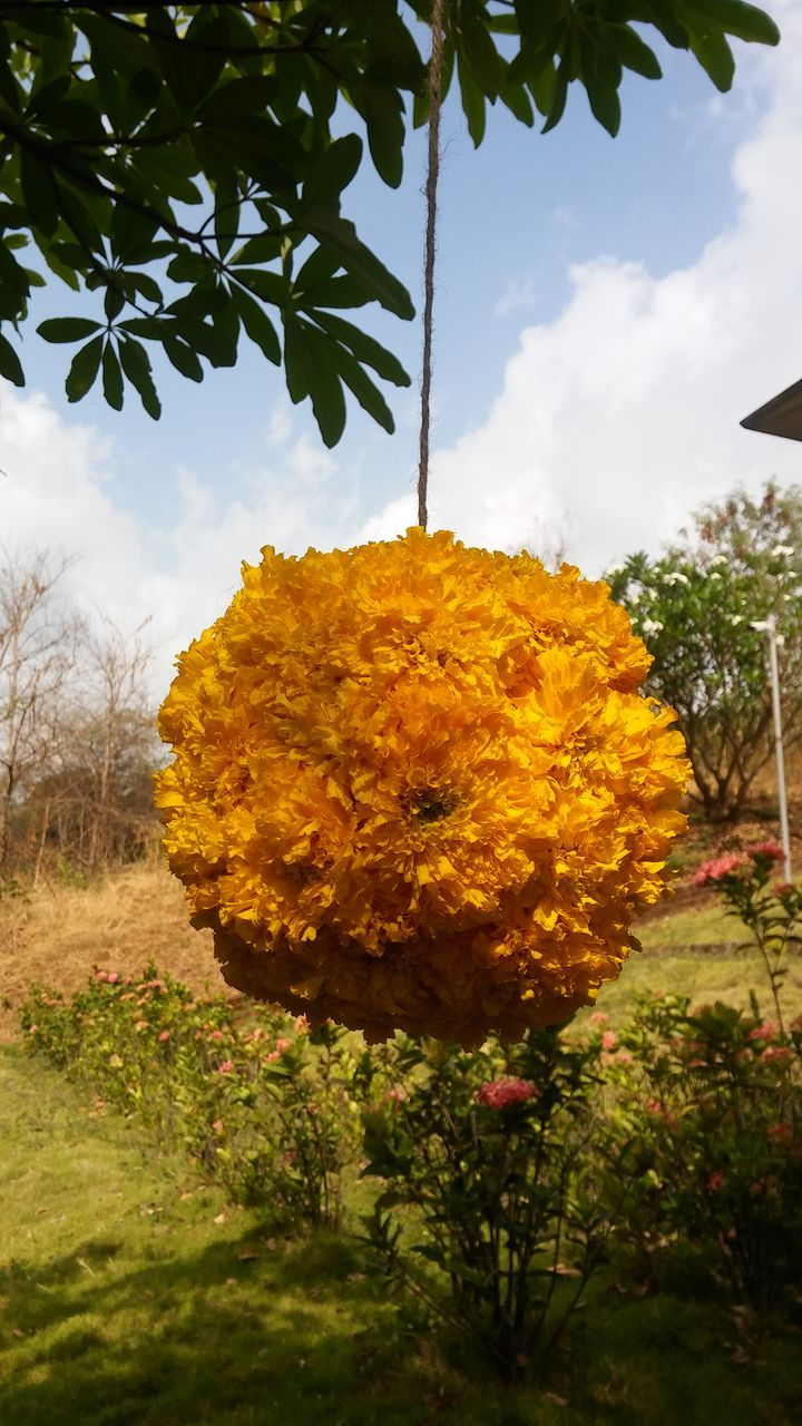 flower, tree, hanging, growth, nature, sky, yellow, leaf, no people, plant, day, outdoors, beauty in nature, cloud - sky, fragility, close-up, low angle view, freshness