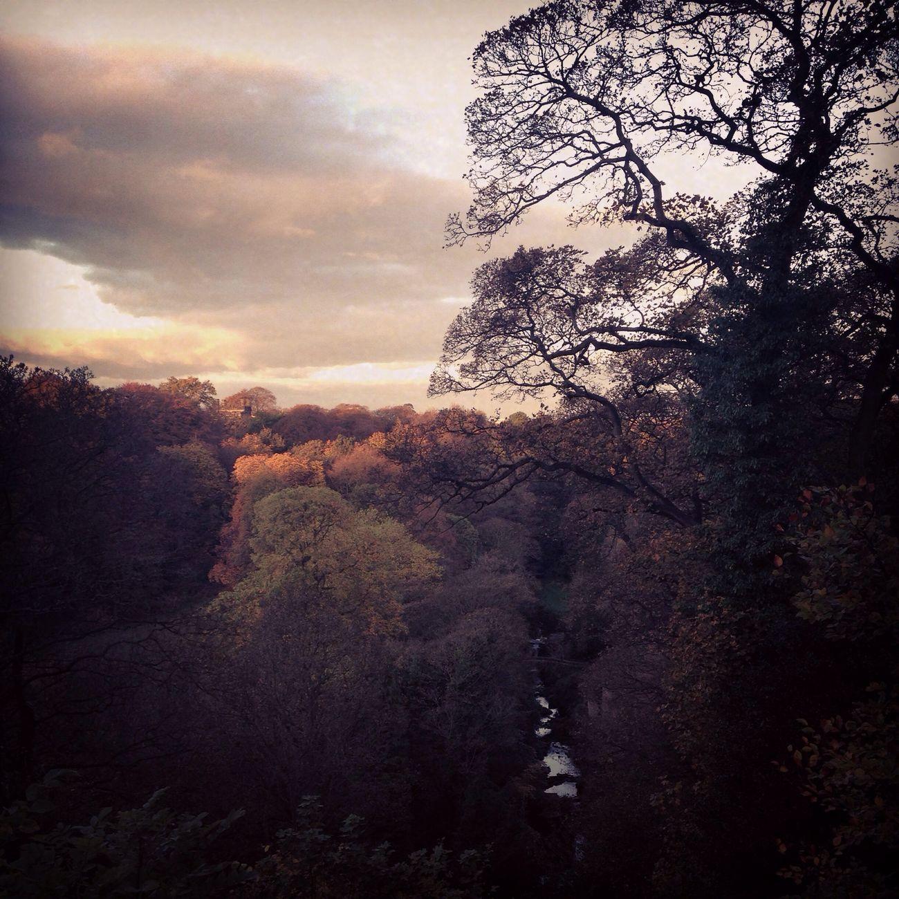 Autumn Colors Of Autumn Scenery EyeEm Best Shots