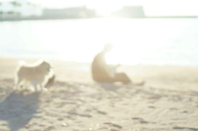 Nofilter Seaside White Album WhiteCollection Japan Photography Oldlens