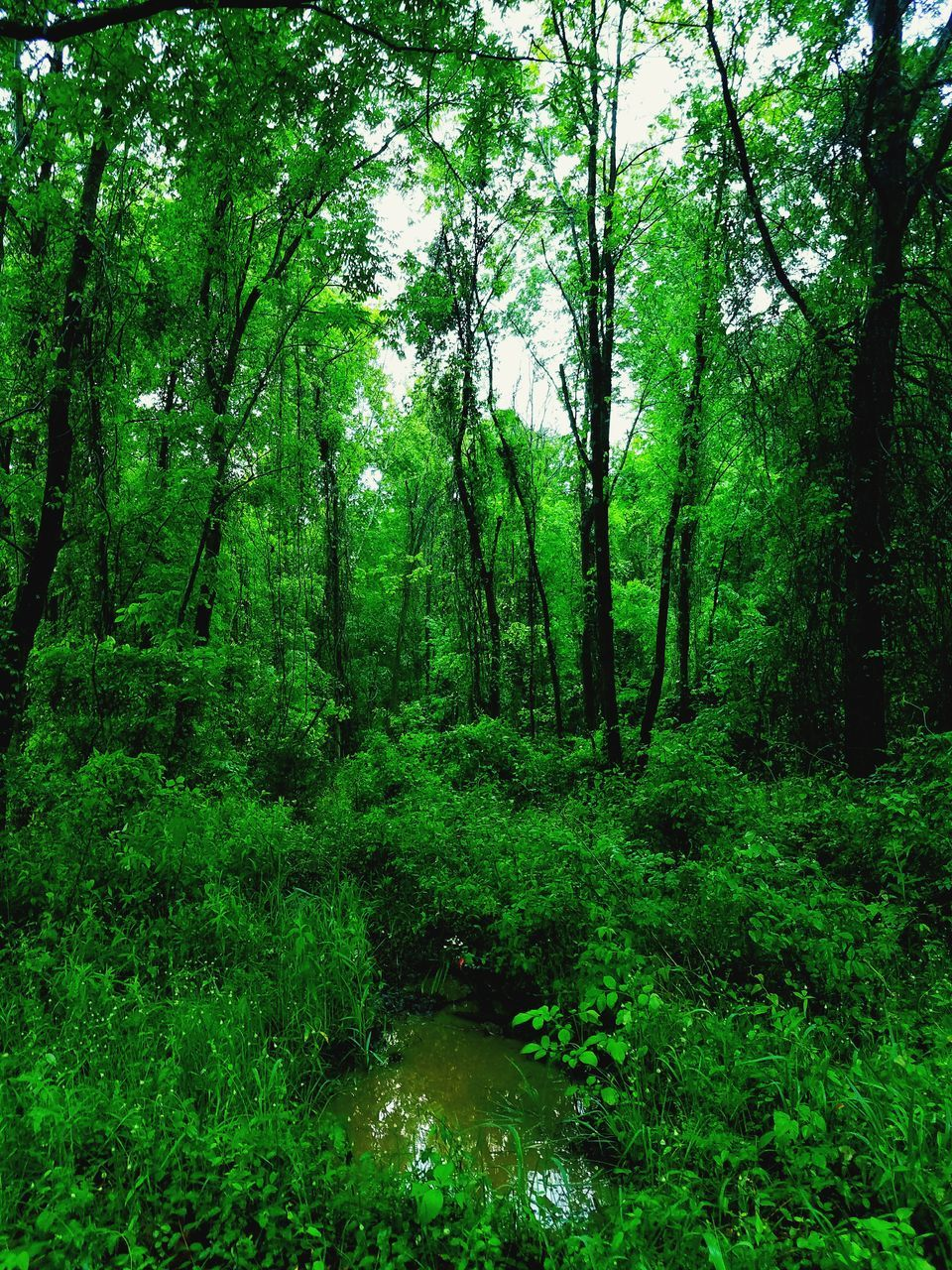forest, nature, green, tree, tranquility, beauty in nature, no people, green color, growth, day, scenics, outdoors