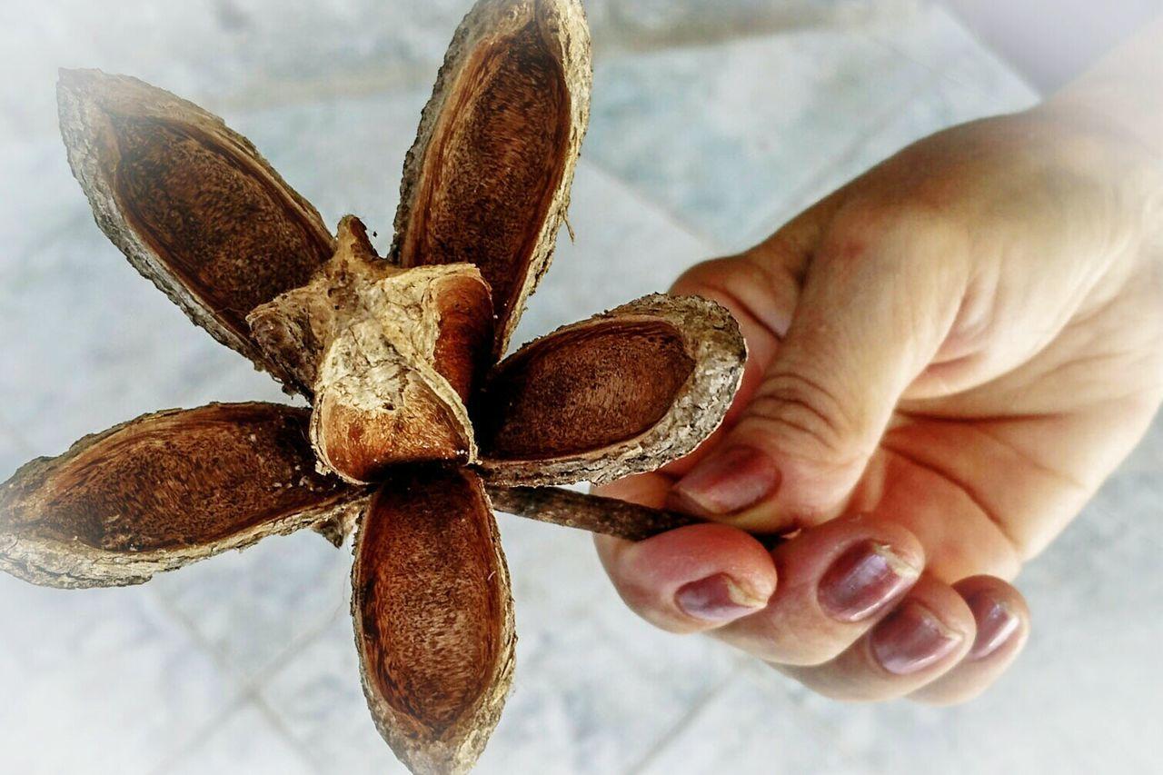 Hand With Cedar Flower Flor De Cedro Do Brasil Motus Natura