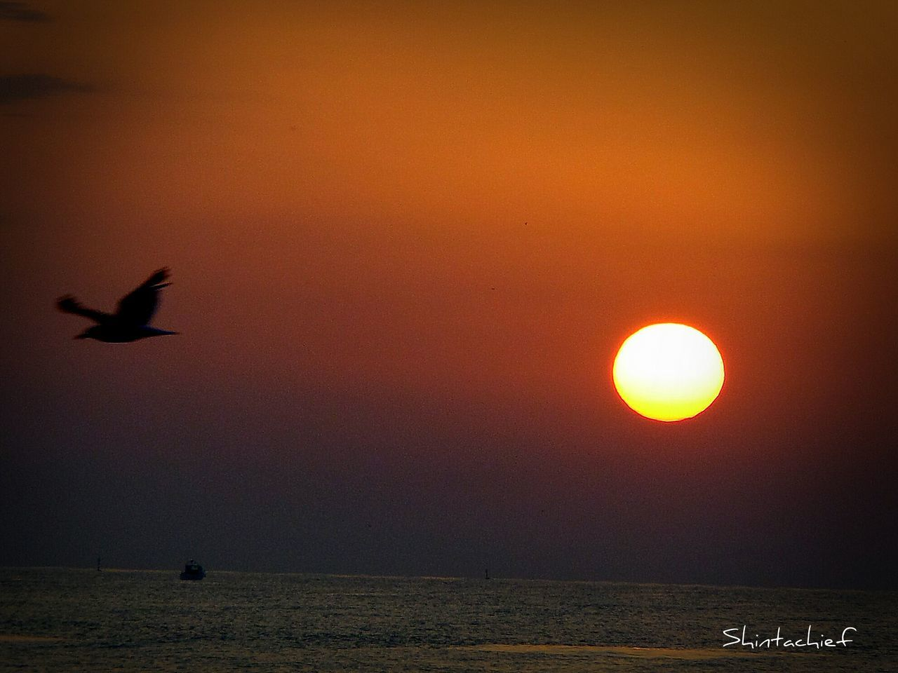 sunset, nature, silhouette, sun, orange color, beauty in nature, water, sea, flying, scenics, bird, sky, outdoors, no people, tranquil scene, tranquility, horizon over water, animal themes, animals in the wild, day