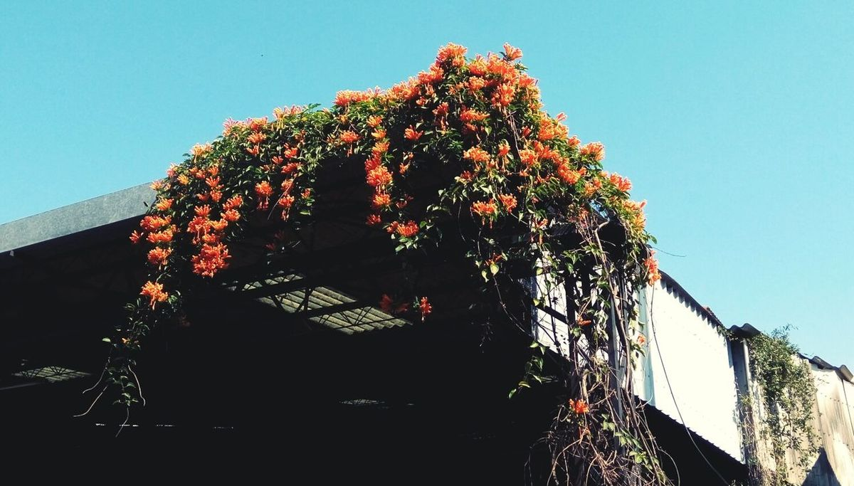 Building And Nature Orange Flowers Flowers Streetphotography Outdoor Nature