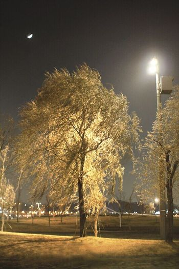 Han River Park Moon And Trees Evening Light Riverside Hang Down Fluttering In The Wind Fluttering Night View Crescent Moon Roadlight Moon Light Night Stroll  Night Sky Evening Sky Confusion Balanced Reaction Night Lights