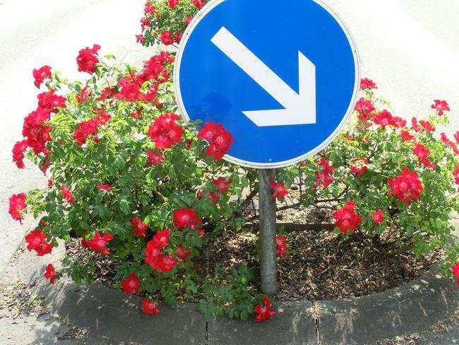 Blume Flower Verkehrszeichen Road Sign Geseke NRW Nordrheinwestfalen