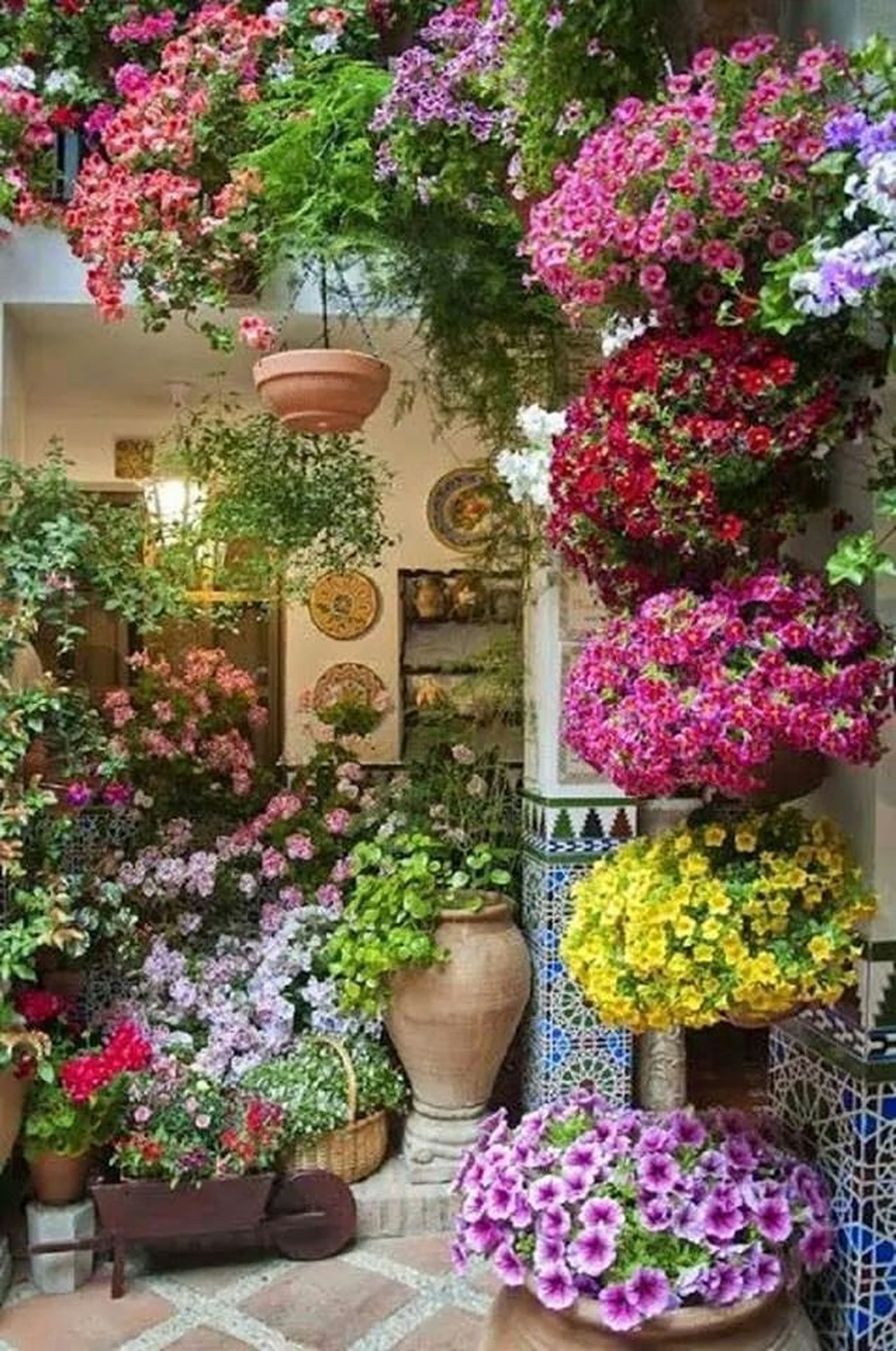 flower, freshness, plant, growth, fragility, potted plant, abundance, beauty in nature, multi colored, variation, nature, for sale, choice, bouquet, petal, pink color, in bloom, retail, purple, blossom