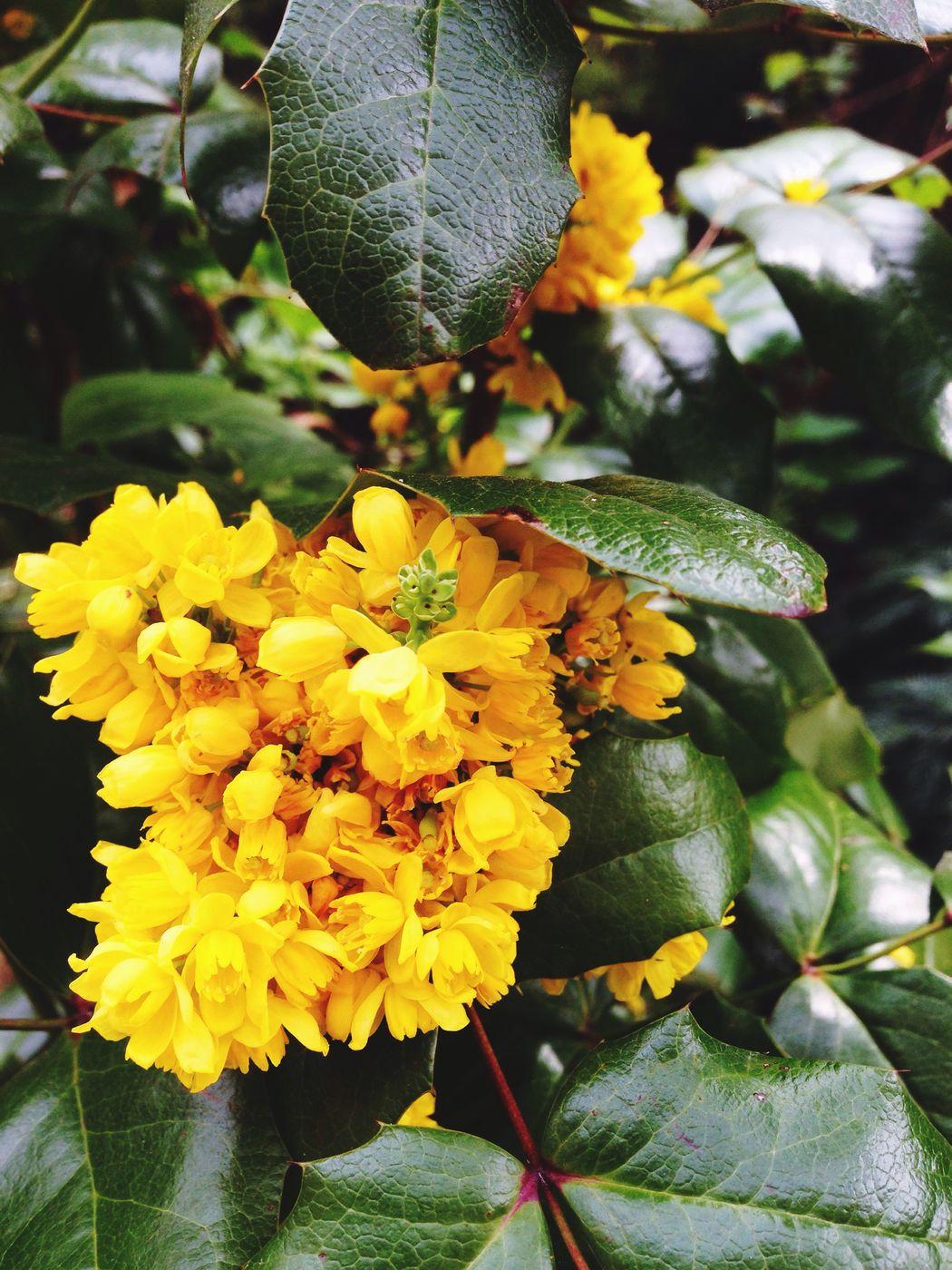 Freshness Green Yellow Feverish Tropical